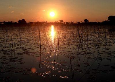 5795e08a0ad17d3c2b66f1ac_sunset-reeds