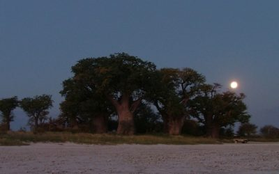 HUNTING IN BOTSWANA: THE BOTSWANA PREDATOR CONSERVATION TRUST'S POSITION